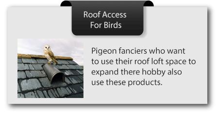 Bird-access
